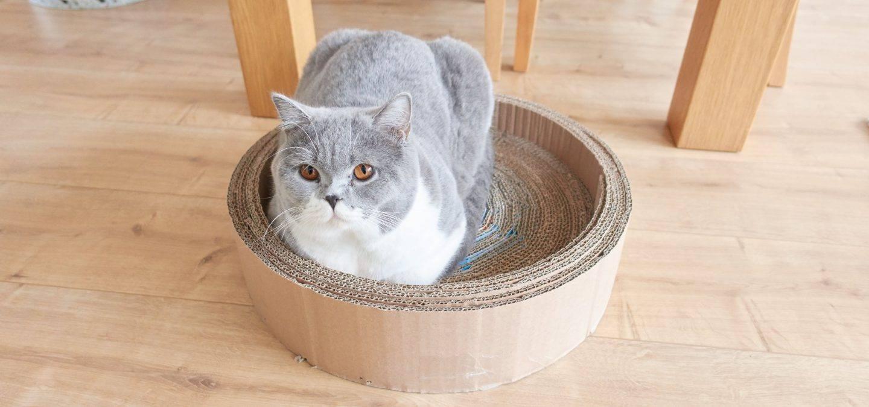Marble in kartonnen kattenmandje