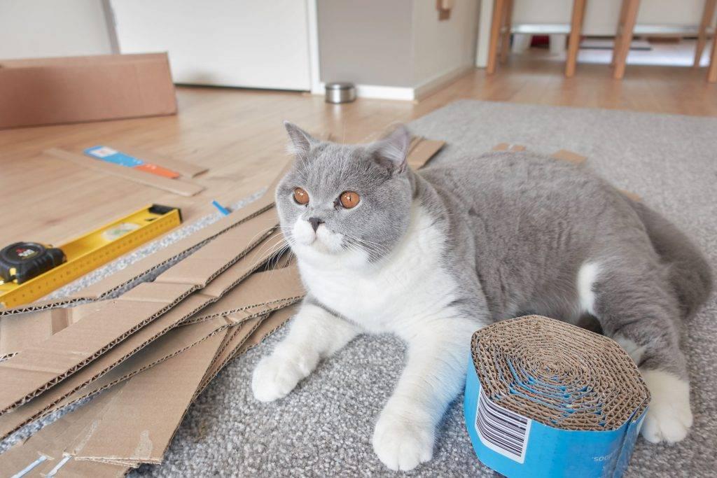 Marble helpt met het knutselen van het kartonnen kattenmandje