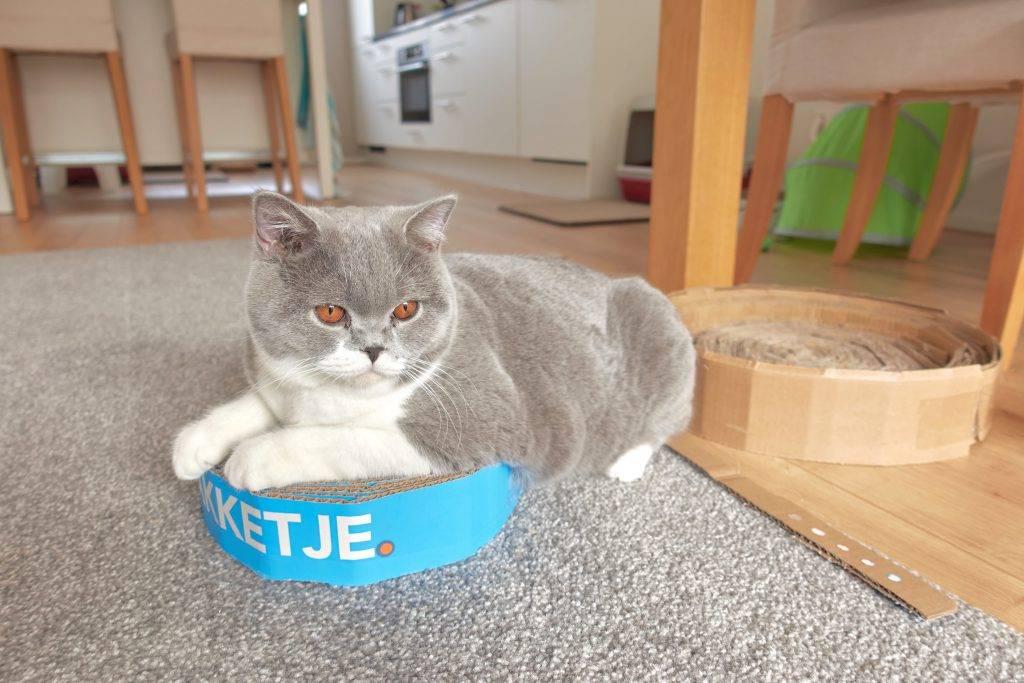 Marble op een heel klein kartonnen kattenmandje
