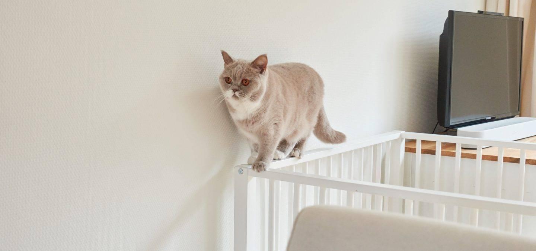 Kat loopt over randje van een box